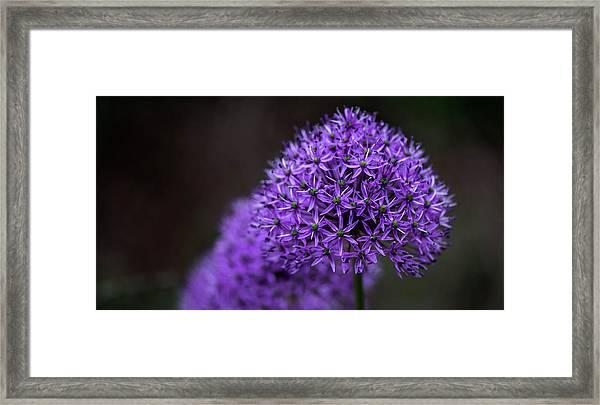 Eternal Purple Framed Print