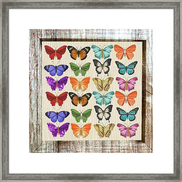 Colourful Butterflies Collage Framed Print