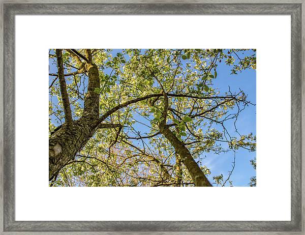 Up A Tree Framed Print