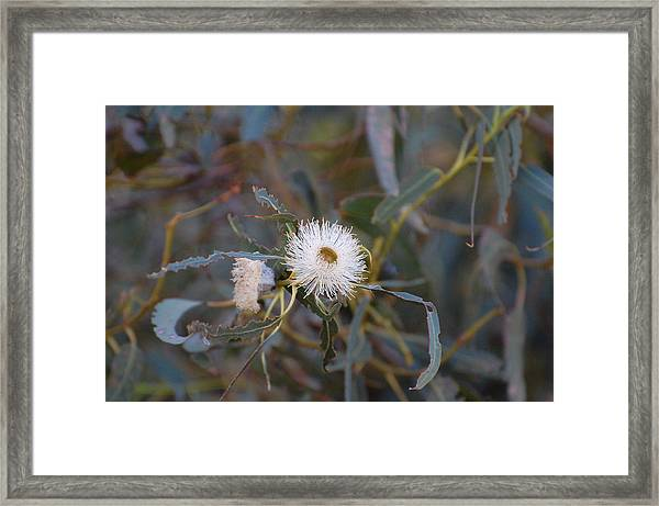 Up In The Eucalyptus Framed Print by Jean Booth
