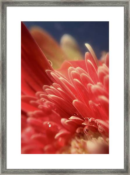 Up Tangerine Framed Print