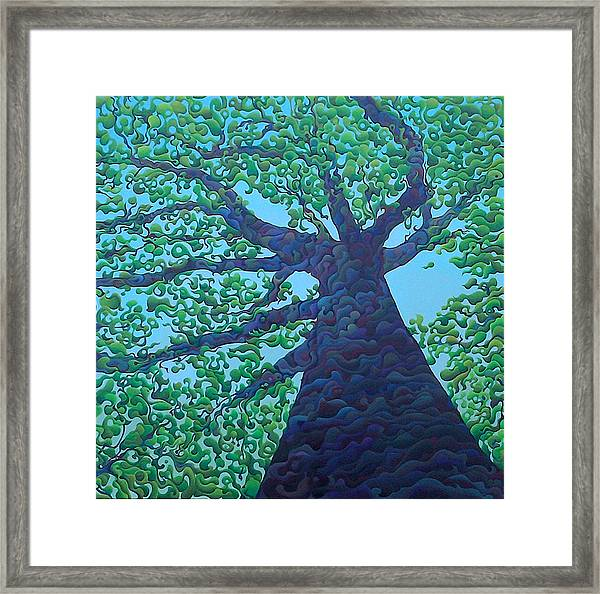 Upward Treejectory Framed Print