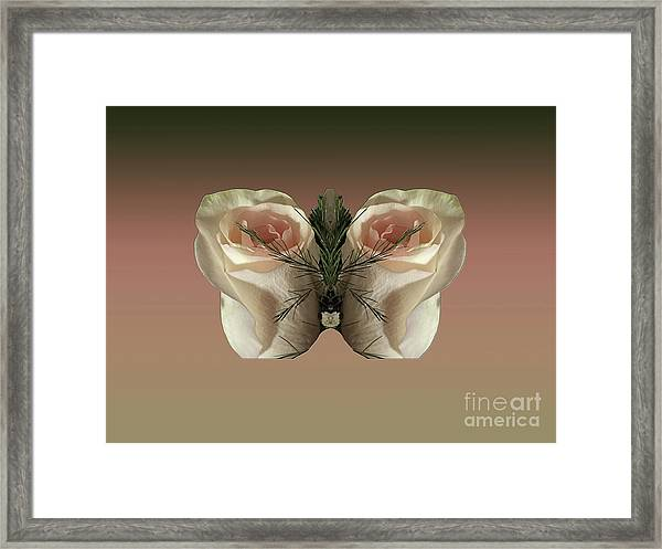 Vanilla Butterfly Rose Framed Print