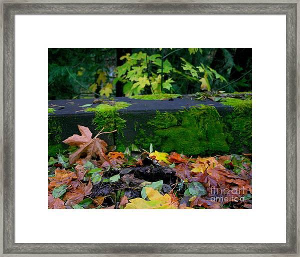 Varigated Fall Framed Print