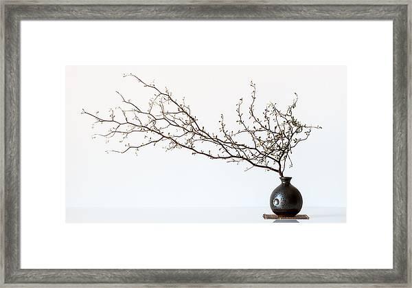 Vase And Branch Framed Print