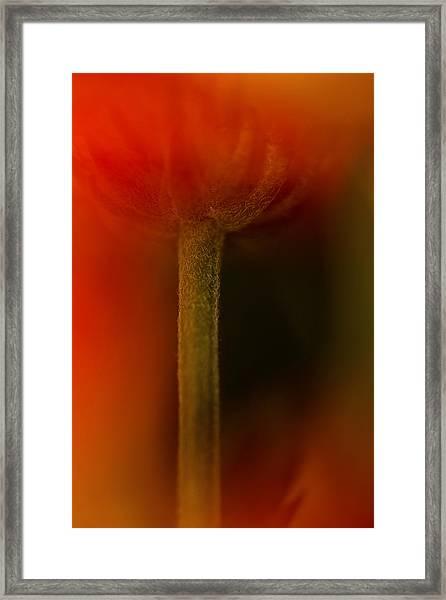 Veiled Framed Print