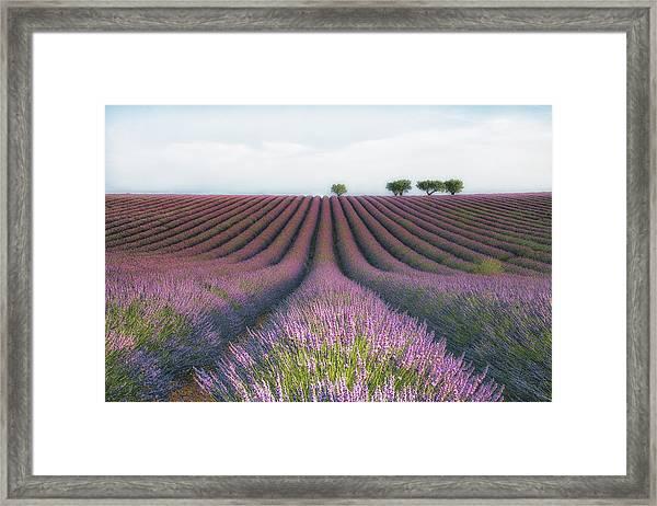 Velours De Lavender Framed Print