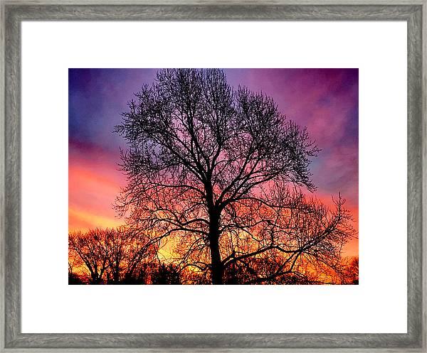 Velvet Mood Framed Print