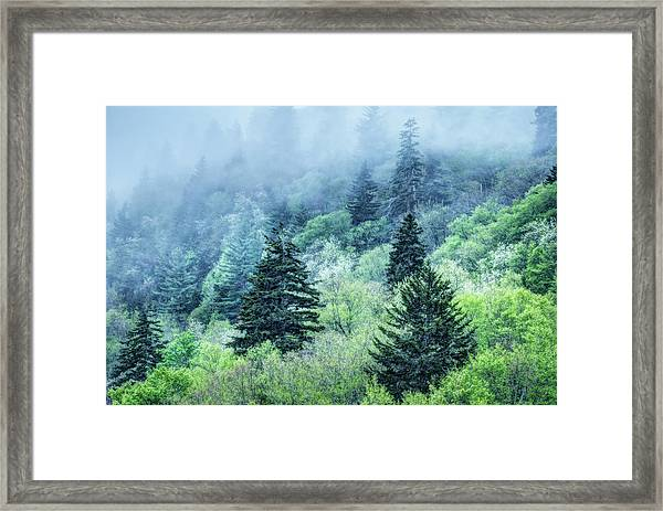 Verdant Forest In The Great Smoky Mountains Framed Print