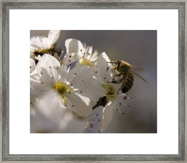 Vernal Equinox I Framed Print