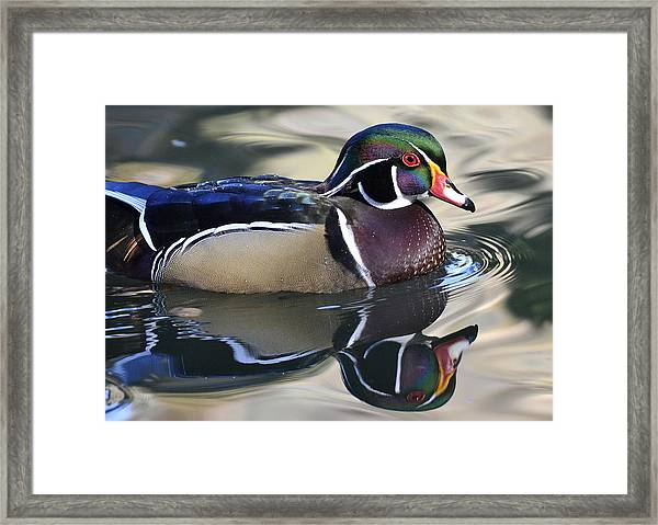 Vibrant Feathers Framed Print