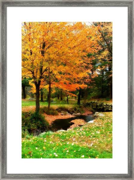 Vibrant October Framed Print