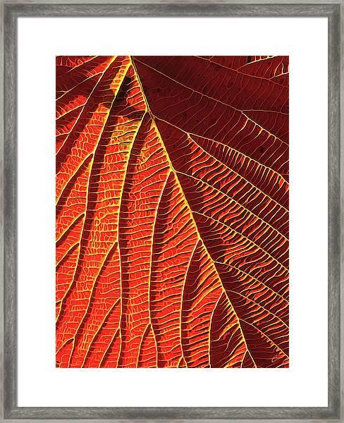 Vibrant Viburnum Framed Print