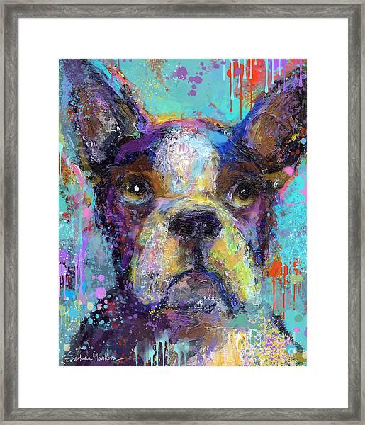 Vibrant Whimsical Boston Terrier Puppy Dog Painting Framed Print