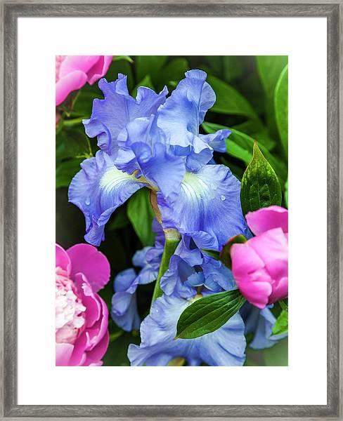 Victoria Falls Iris Framed Print