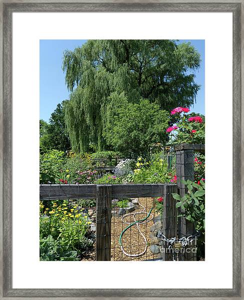 Victory Garden Lot And Willow Tree, Boston, Massachusetts  -30958 Framed Print