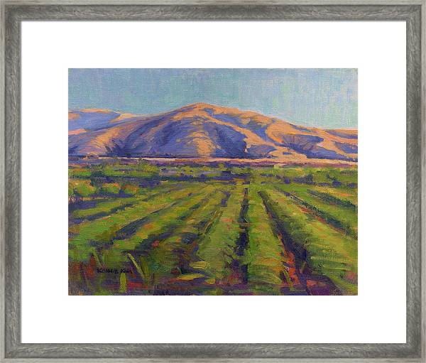 View From The Train Framed Print