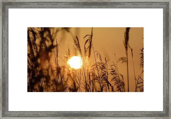 View Of Sun Setting Behind Long Grass B Framed Print