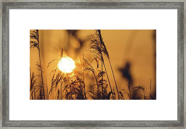 View Of Sun Setting Behind Long Grass C Framed Print