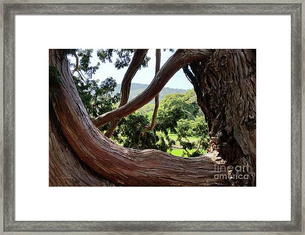 View Through The Tree Framed Print
