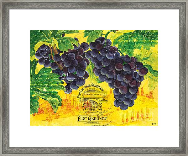 Vigne De Raisins Framed Print