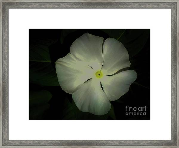 Vinca Bloom Night Glow Framed Print