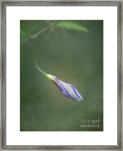 Vinca Framed Print