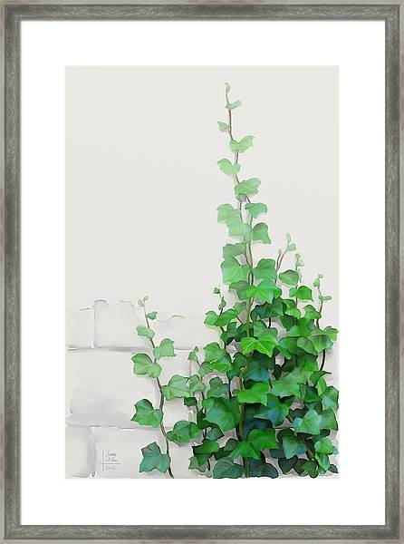 Vines By The Wall Framed Print