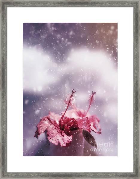 Vintage Flower In The Summer Rain Framed Print