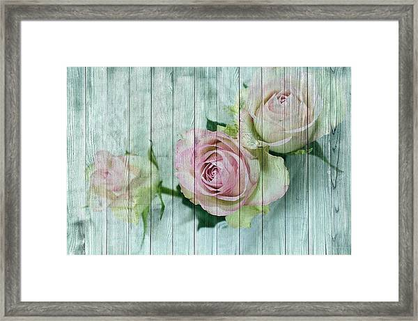 Vintage Shabby Chic Pink Roses On Wood Framed Print