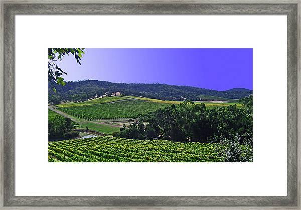 Vinyard Framed Print