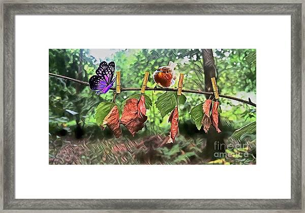 Violet And Robin Framed Print