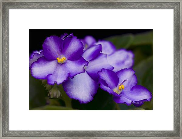 Framed Print featuring the photograph Violet Dreams by William Jobes
