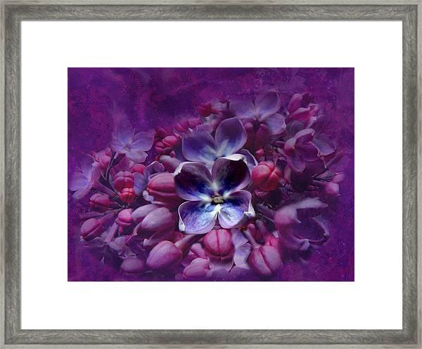 Violet Lilac Framed Print