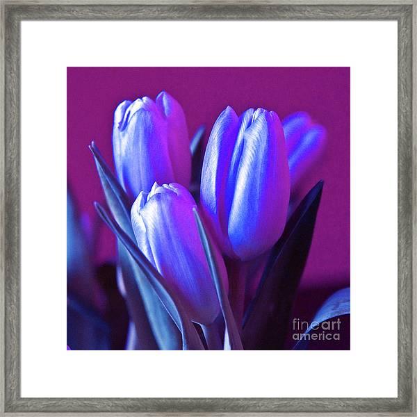 Violet Poetry Of Spring Framed Print