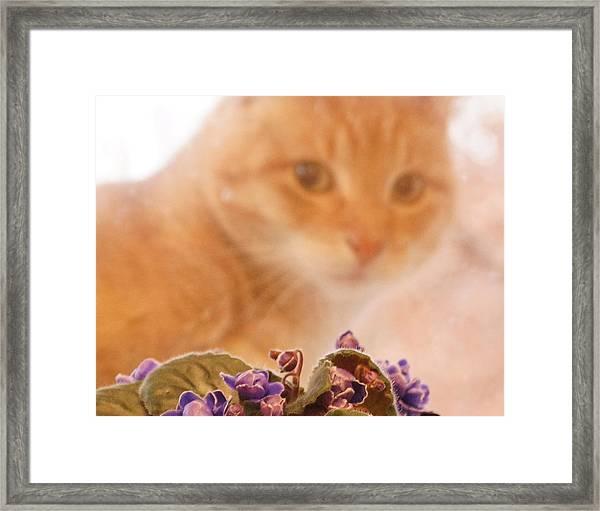 Violets With Cat Framed Print