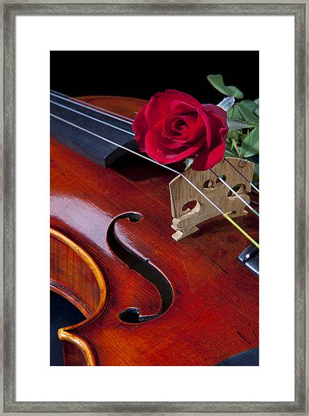 Violin And Red Rose Framed Print
