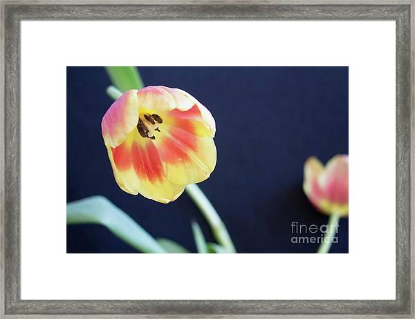 Virgin Beauty Framed Print