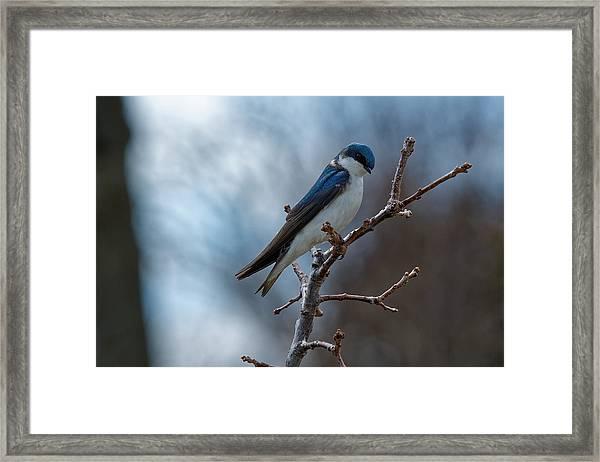 Vision In Blue Framed Print