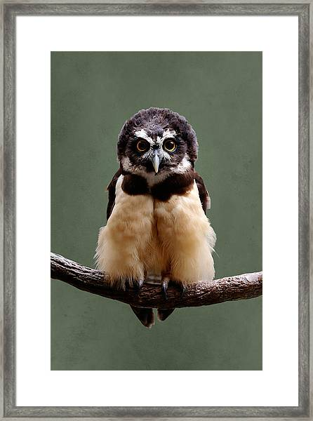 Visual Definition Of Adorable Framed Print