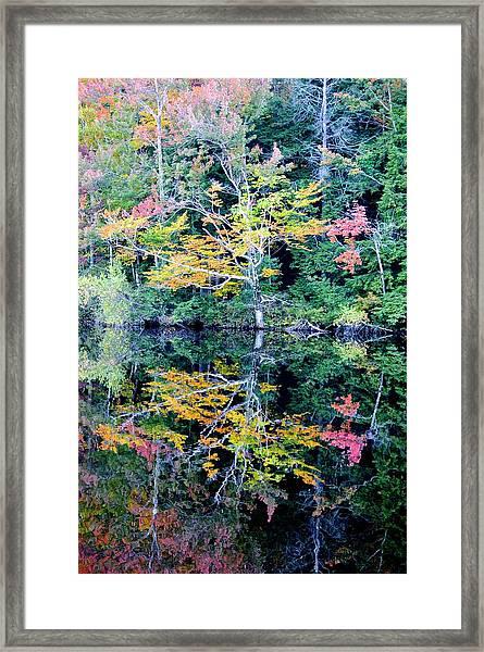 Vivid Fall Reflection Framed Print