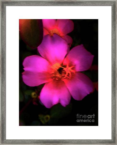 Vivid Rich Pink Flower Framed Print