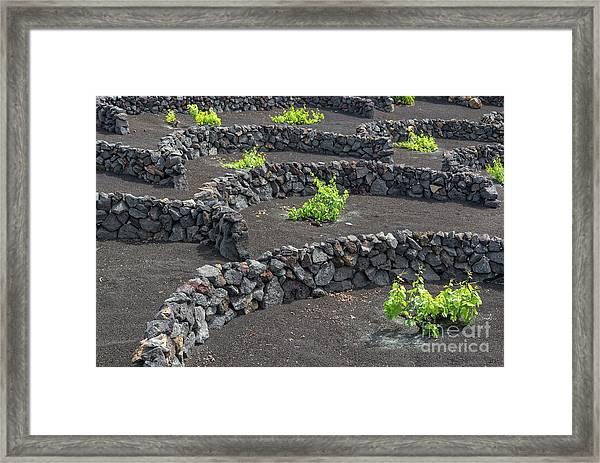 Volcanic Vineyards Framed Print