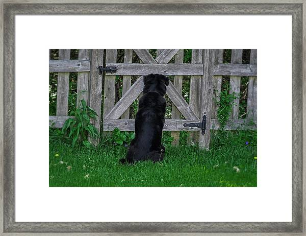 Waiting At The Gate Framed Print
