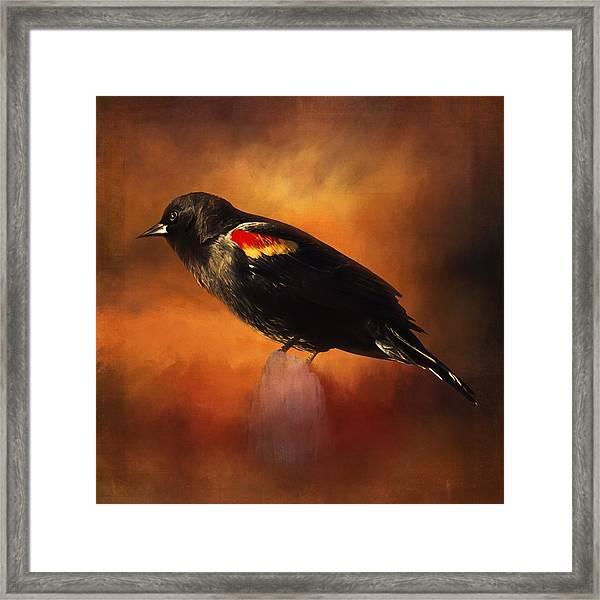 Waiting - Bird Art Framed Print