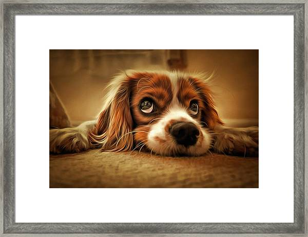 Waiting Pup Framed Print