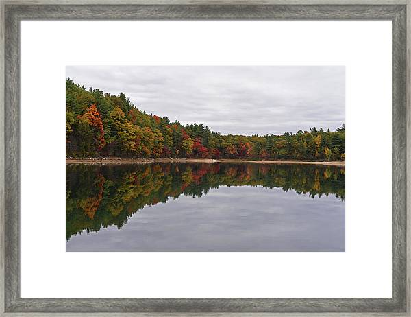 Walden Pond Fall Foliage Concord Ma Reflection Trees Framed Print
