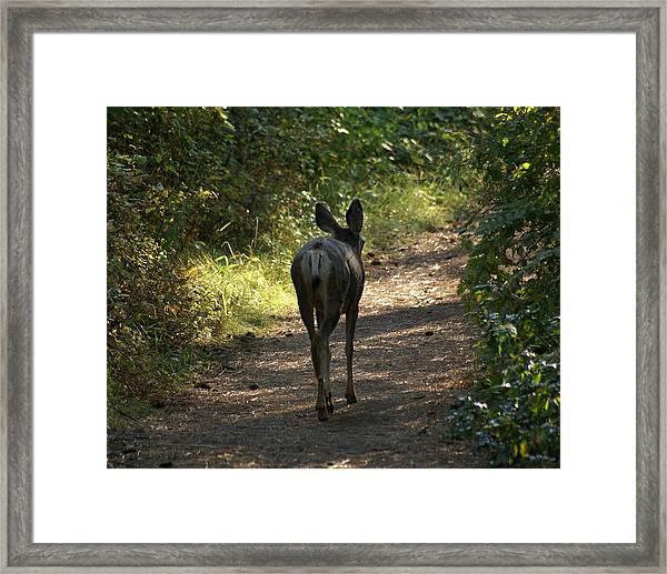 Walk On Framed Print