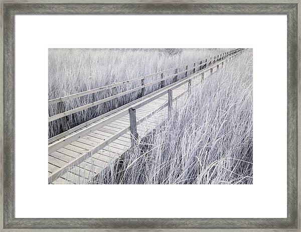 Walk Through The Marsh Framed Print
