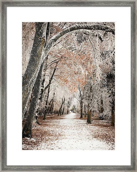 Walking Dogs In Winter Framed Print